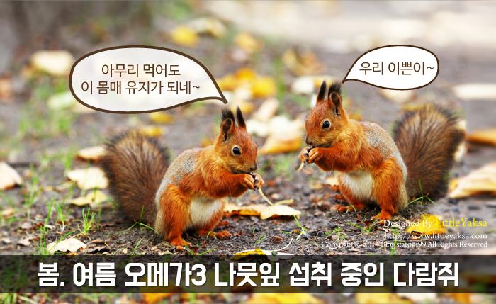1208-가을나라-다람쥐_14.jpg