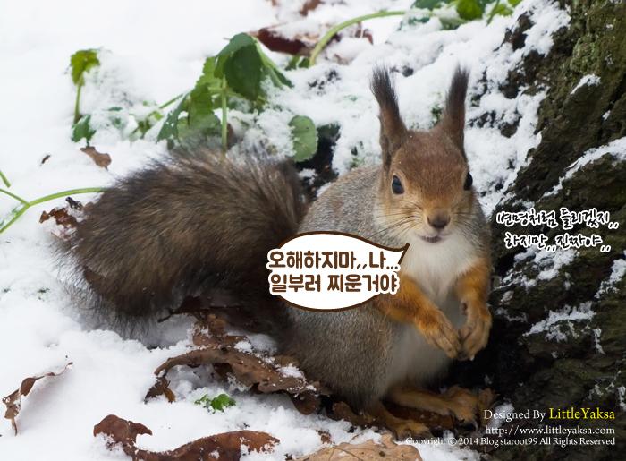1208-가을나라-다람쥐_21.jpg
