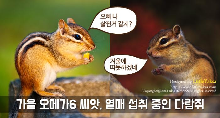 1208-가을나라-다람쥐_19.jpg